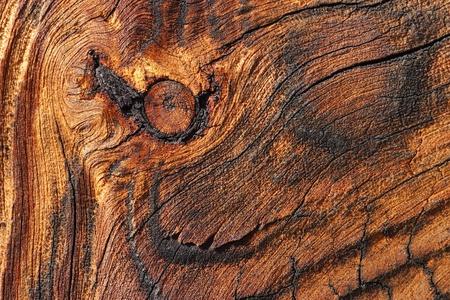 veiny: Weather beaten veiny wood pattern Stock Photo