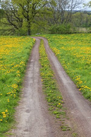 Gravel road in the farmland photo