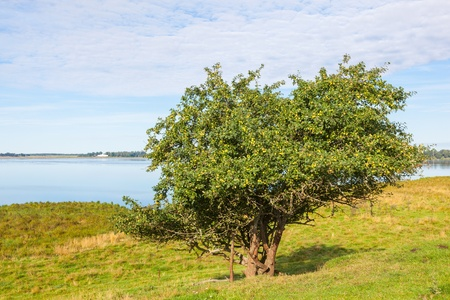 waters  edge: Apple trees at waters edge Stock Photo