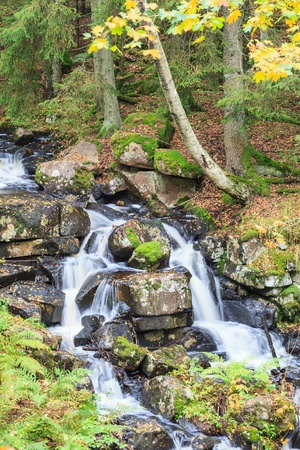 Stream with waterfall in the forest photo