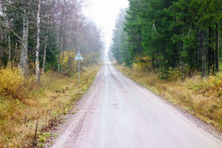 Dirt road through the foggy forest photo
