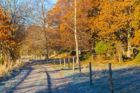 Forest road through autumn landscape photo