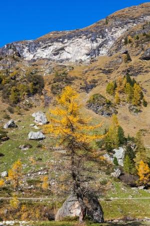 osttirol: Alp mountain in autumn