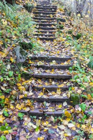 Staircase in a garden in autumn photo