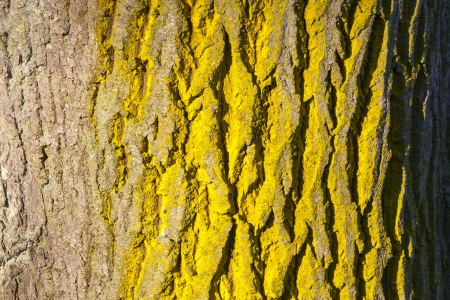 Yellow Trees Images Tree Trunk With Yellow Lichen
