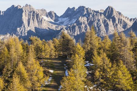 osttirol: Path in the mountain forest Stock Photo