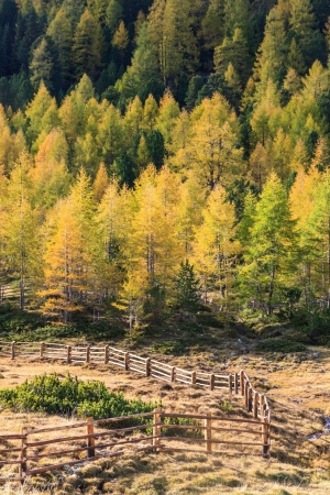osttirol: Wooden fence in the meadow to forest