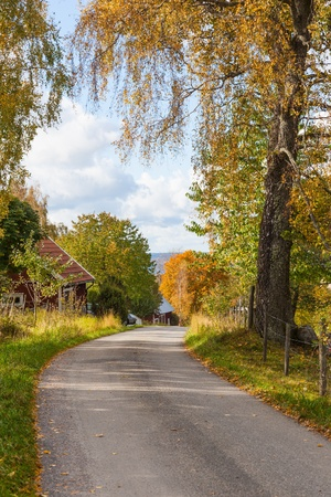 Country road through the autumn landscape photo