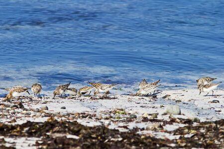 wading: Wading birds at the beach