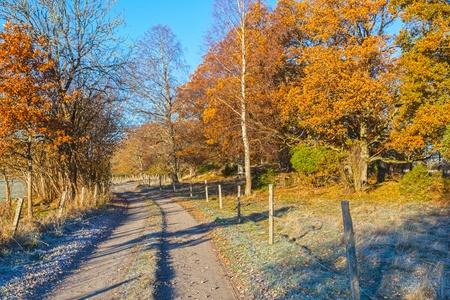 treeline: Forest road through autumn landscape