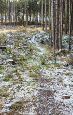 Path that goes into the forest edge in a clearcut area Stock Photo - 22934516