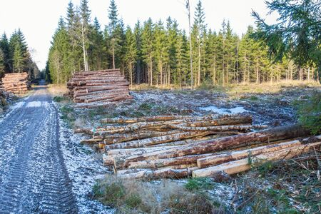 Pile of timber of the woods at a clearcut area