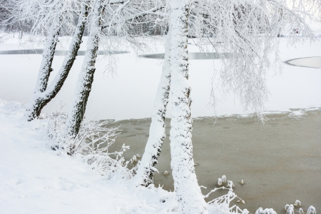 hoarfrost: Hoarfrost covered trees on a frozen lake
