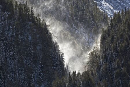 ravine: Forest ravine in snowfall and backlight