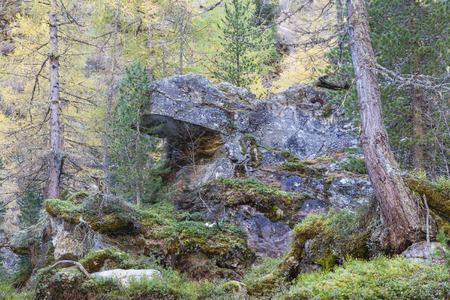 overhang: Rock overhang in a ancient forest