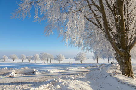 treetrunk: Winter landscape at countryside Stock Photo