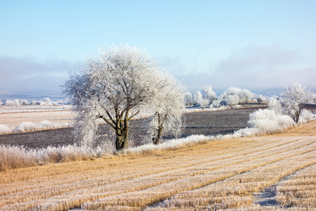 흰 서리: Frozen winter landscape with hoarfrost