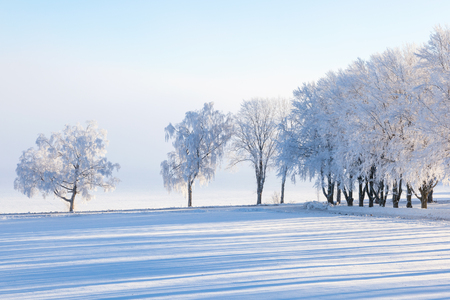 Winter tree by the road in the field