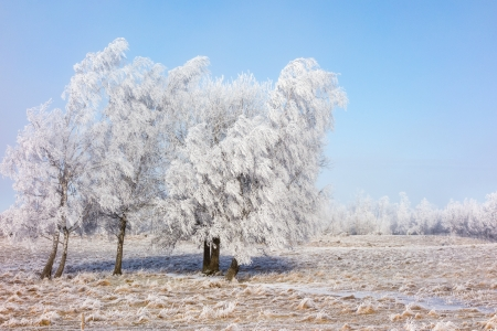 Hoarfrost covered trees in a field Stock Photo