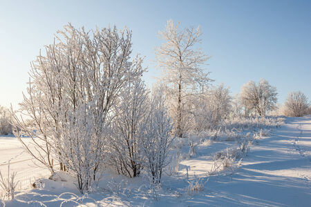 hoarfrost: Hoarfrost covered trees in wintry landscape Stock Photo