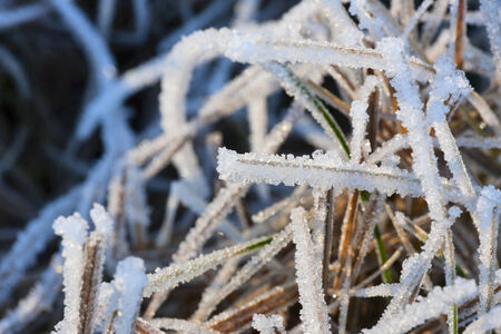 Grass with frost in winter photo