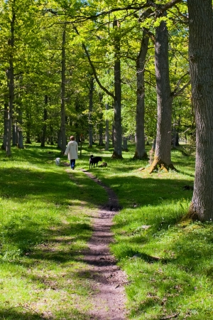 mistress: un'amante passeggiate con il cane Archivio Fotografico