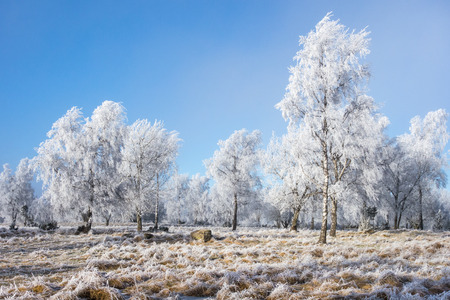 Hoarfrost covered trees in winter landscape photo