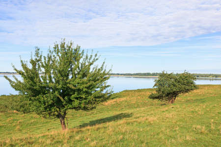 arbres fruitier: Fruit trees at waters edge