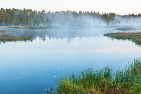 Forest lake with mist in dawn photo