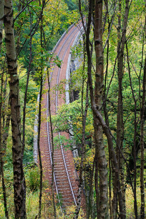 railroad bridge in the forest photo