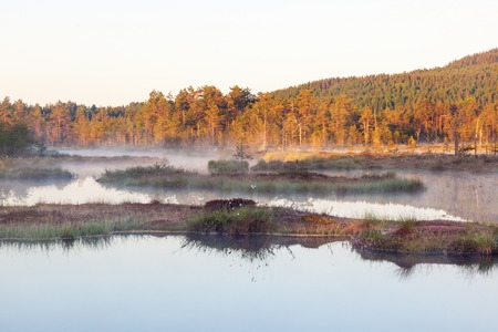 Dawn mist on the lake at the bog photo