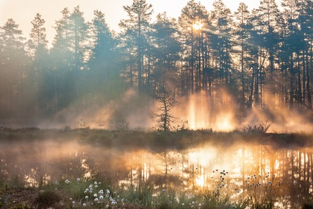 urban jungle: Sunrise with sunbeams through the forest by the lake Stock Photo