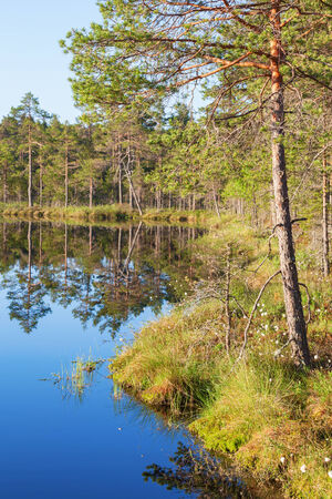 Water´s edge at a forest lake photo