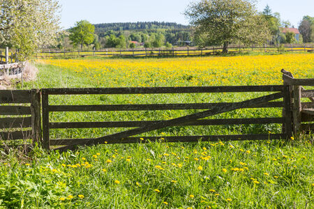 Closed gate to the flower meadow photo
