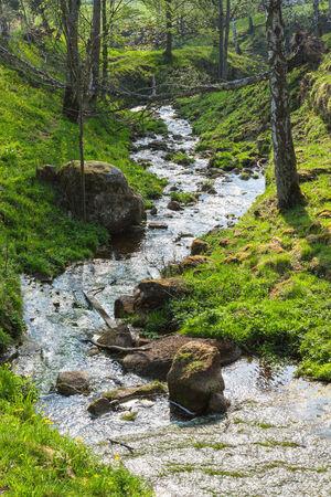 meandering: Meandering creek through a ravine