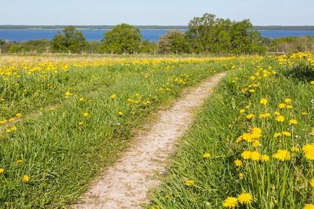 Path over a flowering meadow photo