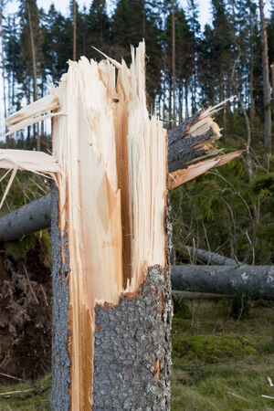 deforested: Broken tree after a storm
