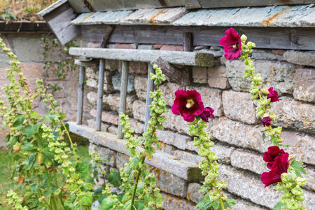 Flowers at the stone wall in the garden photo