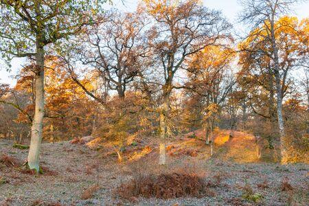 sunspot: Sunspot in Oak tree forest in autumn
