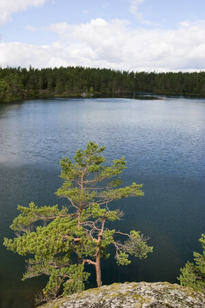 Old growth forest and a lake photo