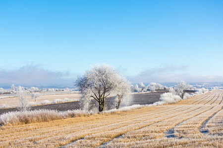 non cultivated land: Frozen field landscape with hoarfrost