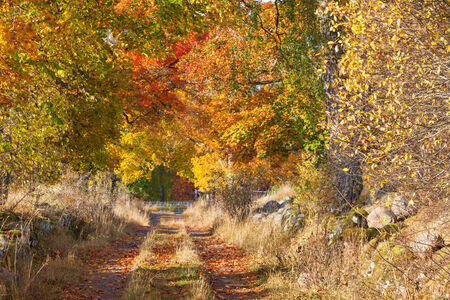 Country road with trees in autumn colors photo