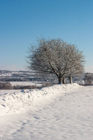 non cultivated land: Stone wall with trees in wintry countryside Stock Photo