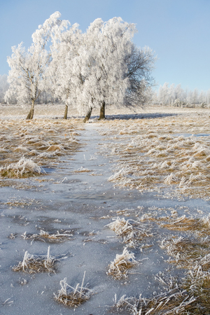 흰 서리: Hoarfrost covered trees in winter 스톡 사진