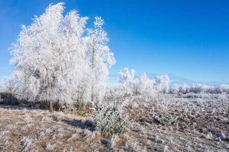 흰 서리: Hoarfrost covered trees in winter landscape
