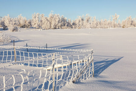 흰 서리: Hoarfrost coverd fence in a field 스톡 사진