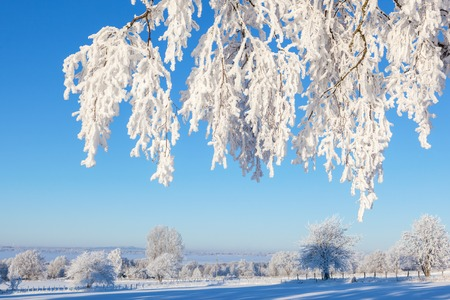 Tree branch with hoarfrost in winter landscape Stock Photo