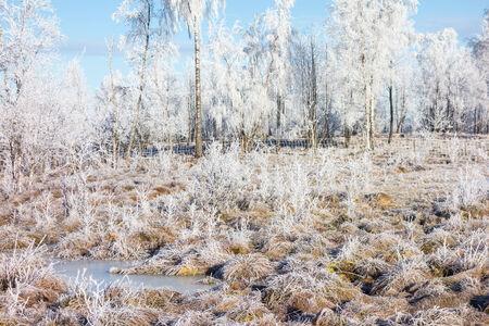 Frozen moor landscape in winter Stock Photo
