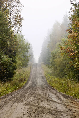Gravel road alley in morning fog and autumn colors photo