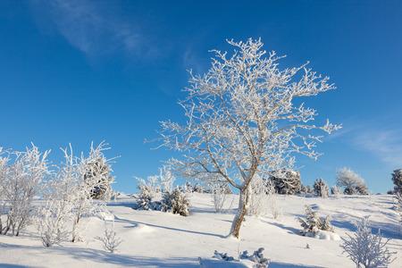 늦었다는 vinter 풍경에 나무 덮여 스톡 콘텐츠